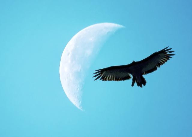 Можно ли делать привороты на убывающую луну